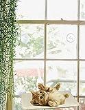 Cat Crib Cuna para Gato
