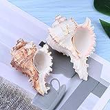 VOSAREA 2pz Natural Grande Conchas de mar Concha pecera Acuario decoración del hogar(6-9 cm)