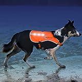 Illumiseen - Chaleco para perro con tiras reflectantes y luces LED recargables por USB, aumenta la visibilidad del perro al caminar, correr, entrenar al aire libre