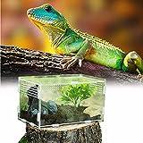 Caja de Alimentación de Insectos, 20X12X12cm Acrílico Transparente Estuche de Cría de Reptiles para Spide, Lagartija, Escorpión, Ciempiés, Rana cornuda, Escarabajo.