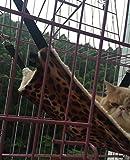 Hamaca para gatos / hurones, ratas, conejos, perros pequeños u otras mascotas, fácil de acoplar a una jaula, 3 diseños: Lynx