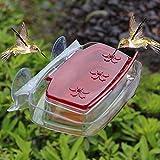Maggift Comedero de colibrí para ventana, 236 ml