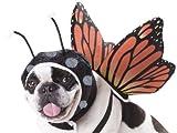 Pet Butterfly Fancy dress costume Medium