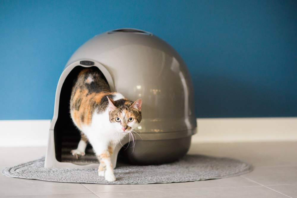 Mejores areneros para gatos