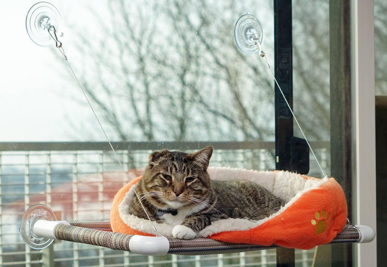 Mejores camas colgantes para gatos para ventana