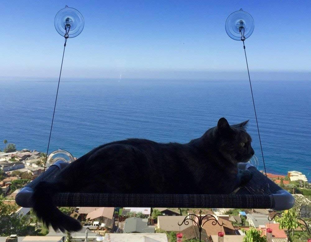 Best Cat Window Perches For Indoor Cats