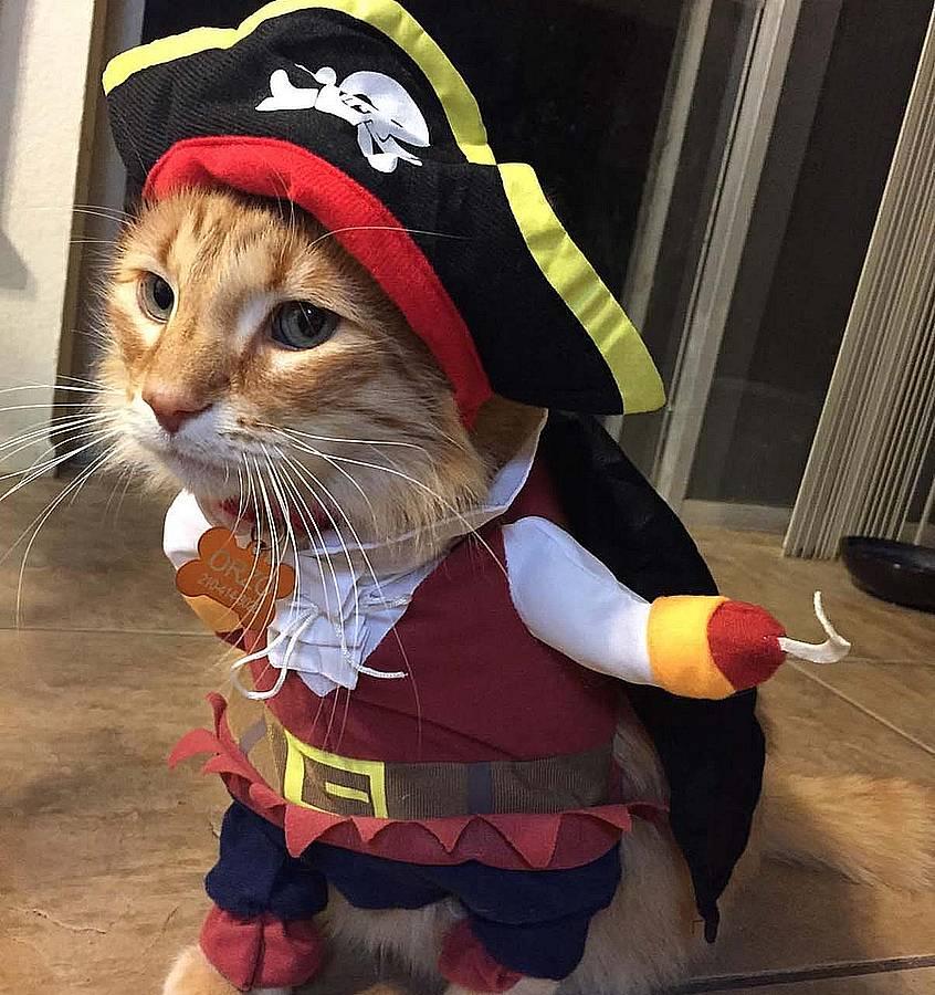 Mejores disfraces de Navidad para gatos
