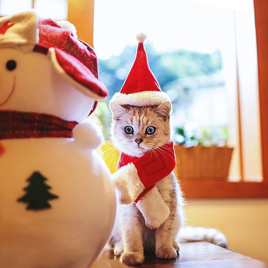 Mejores disfraces de Navidad para gatos (análisis) del 2019 1