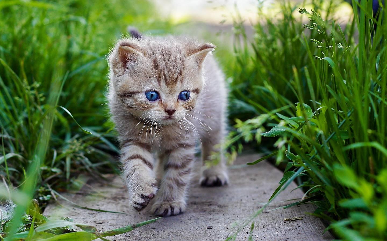 Gatos: accesorios, salud, razas, enfermedades,