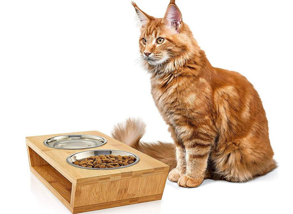 Best Water Bowl for Cats