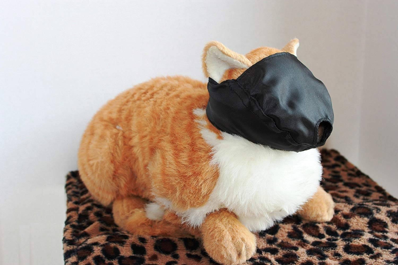 Los mejores bozales para gatos