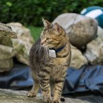 Rastreadores GPS para gatos