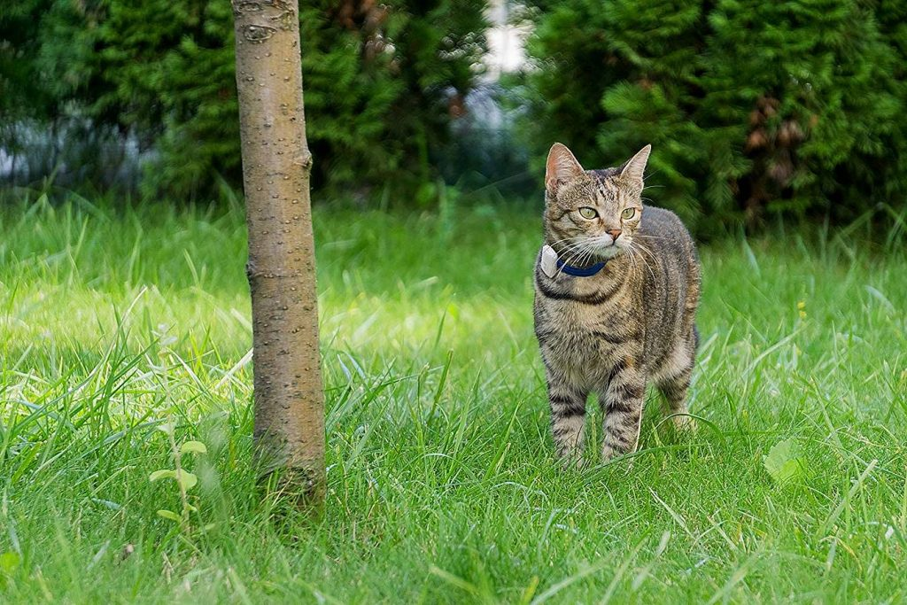 Best Cat GPS Tracker