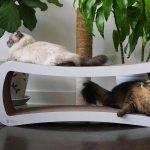 Rascadores de cartón para gatos: los mejores de 2019 (Análisis y guía) 1