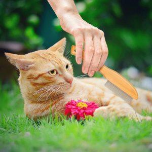 Mejores peines antipulgas para gatos