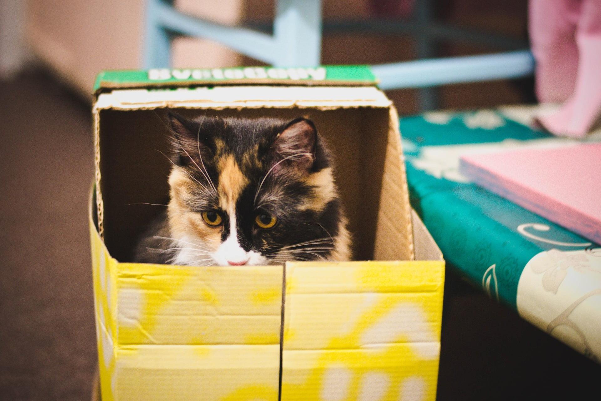 ¿Por qué a los gatos les gustan las cajas tanto?