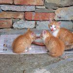 La mejor comida para gatitos para tu gato de 2019 (Análisis) 3