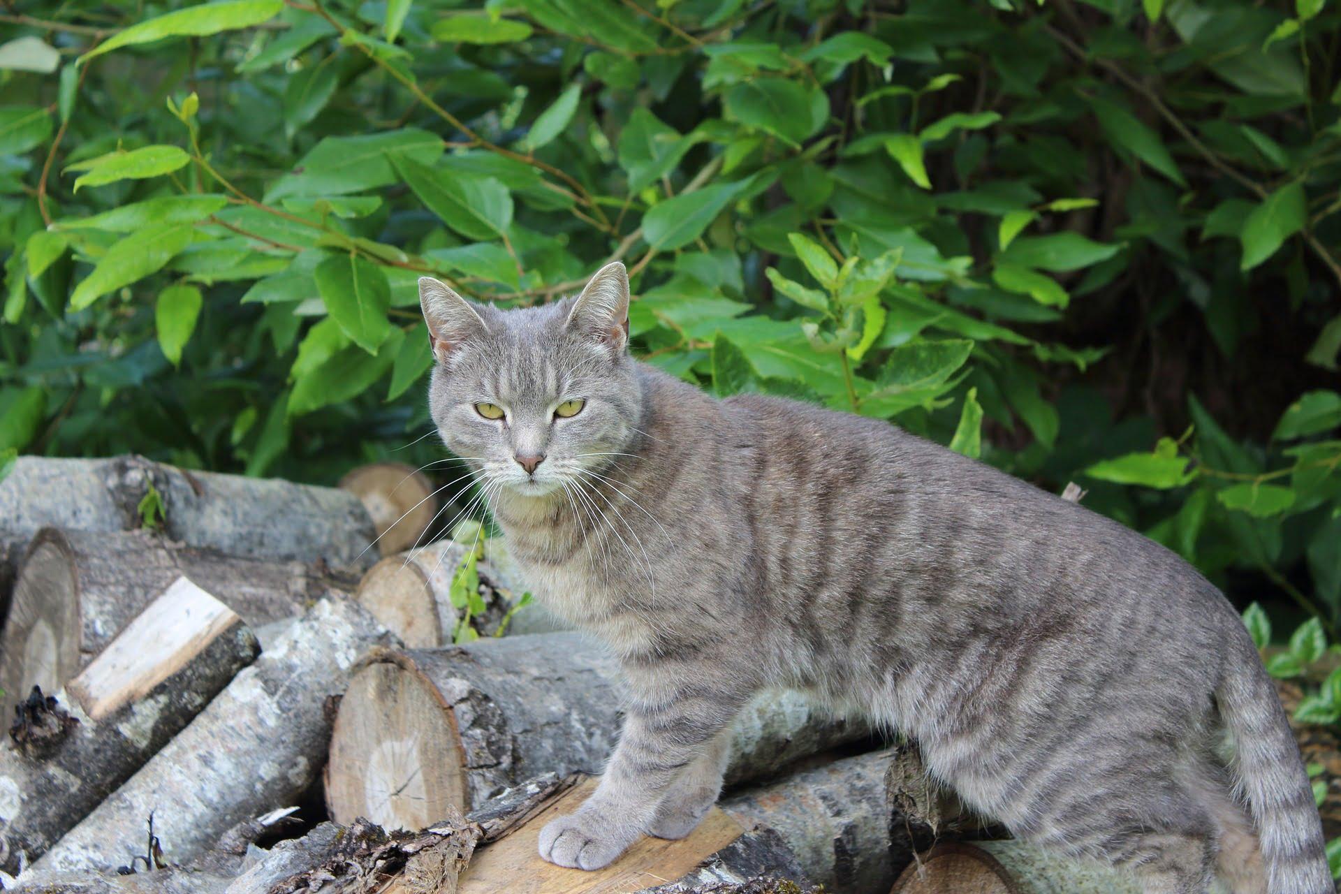 Adiestramiento de gatos