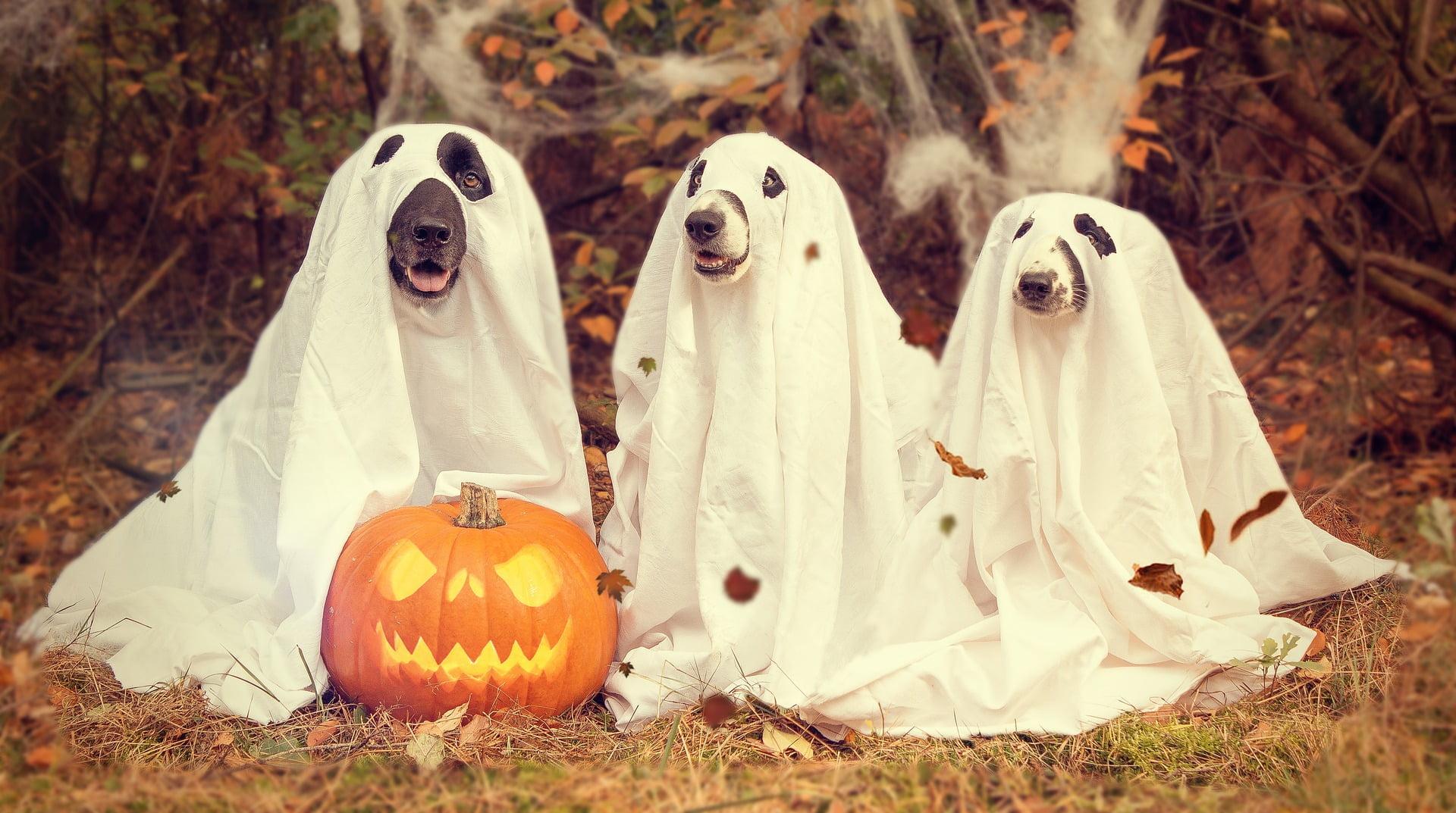 10 Consejos de seguridad para perros en Halloween