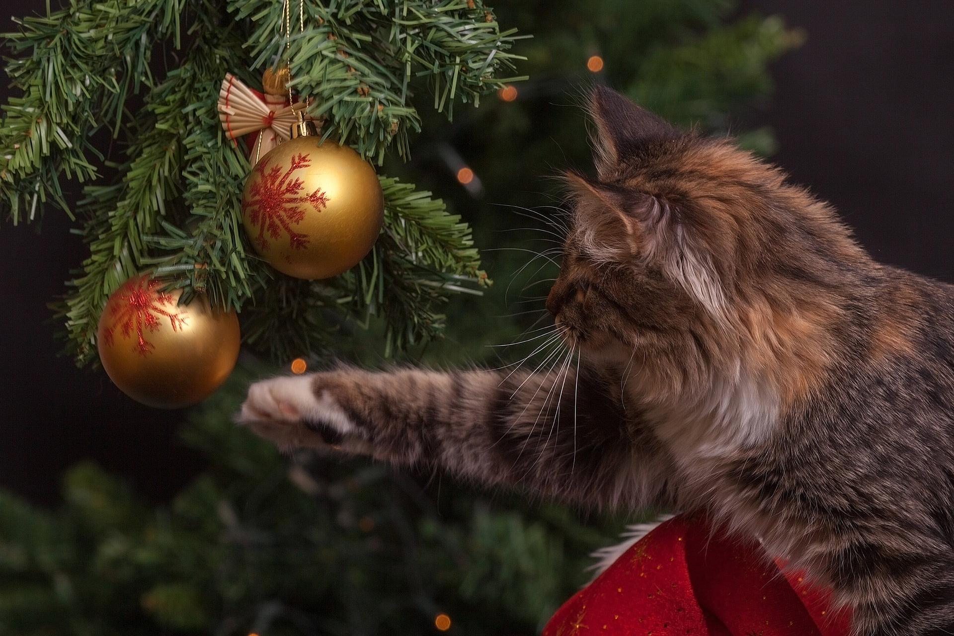 10 Consejos de seguridad para gatos durante la temporada navideña