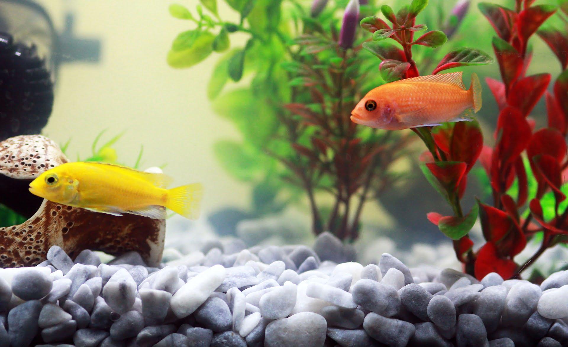 Guías y tutoriales para la salud de acuarios y peces