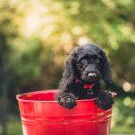 Productos para perros que amamos
