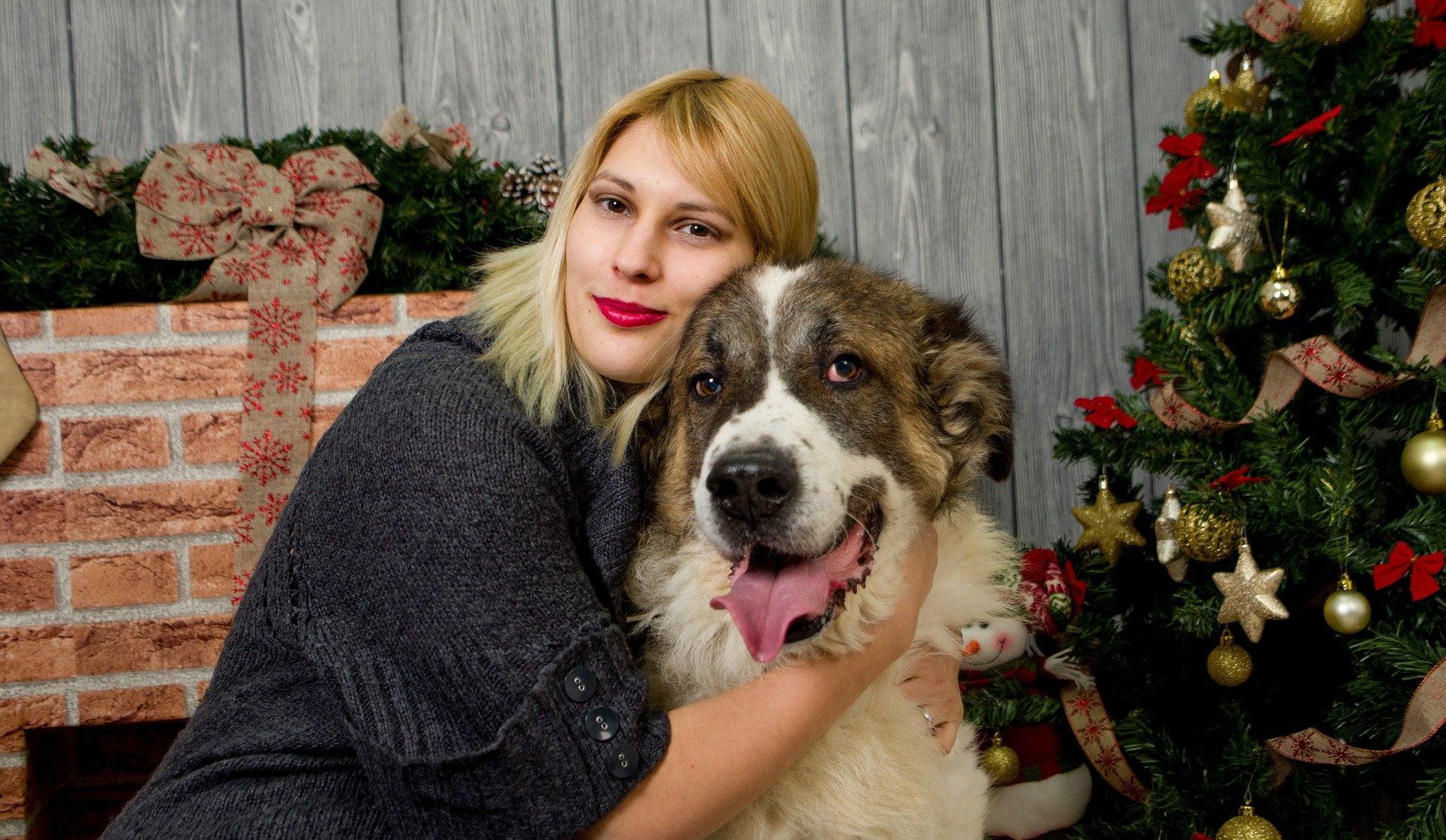 ¿Sabes cómo montar un árbol de navidad a prueba de perros?