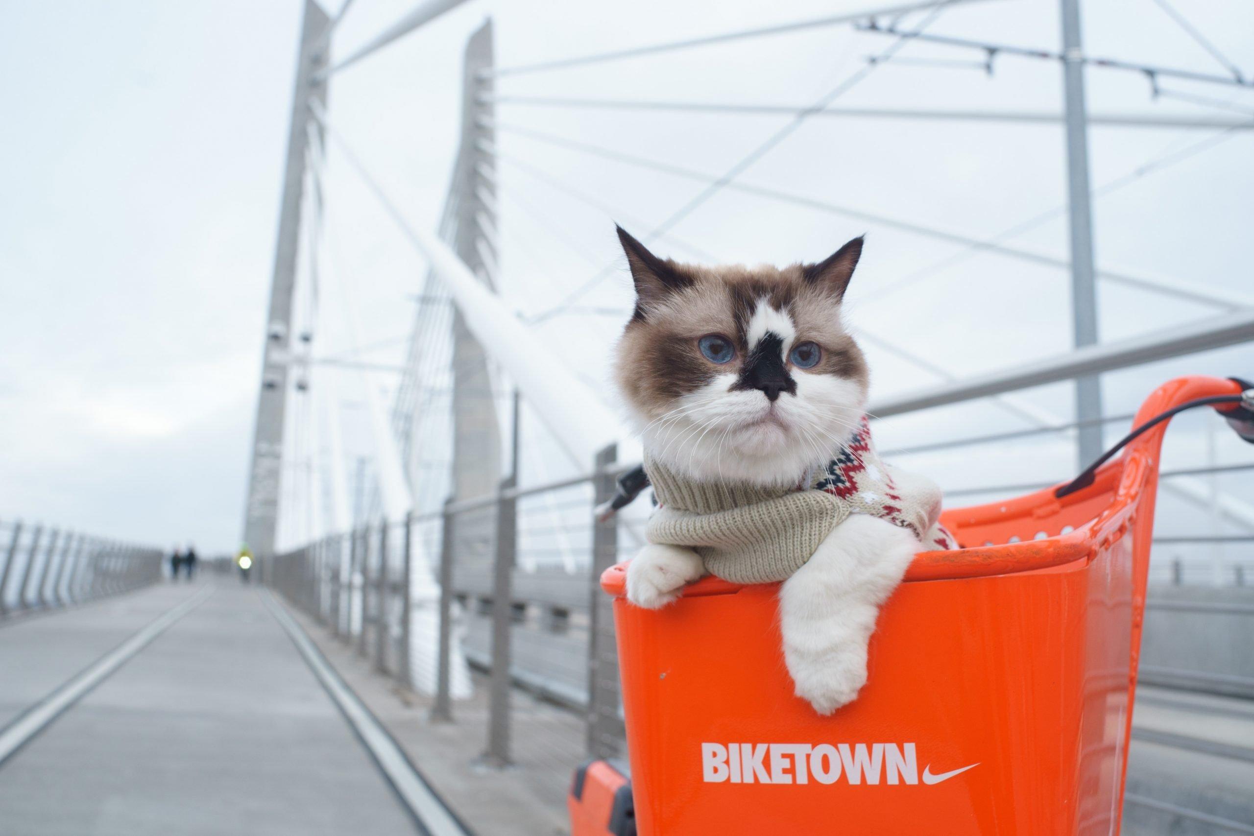 Como meter a un gato en un transportín para gatos