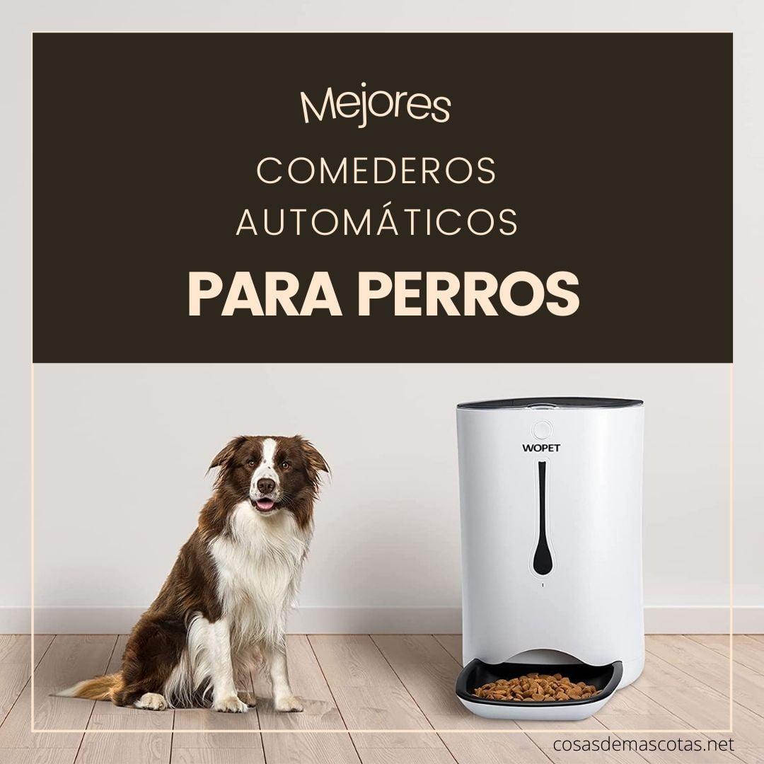Los mejores comederos automáticos para perros [year] (análisis) 4