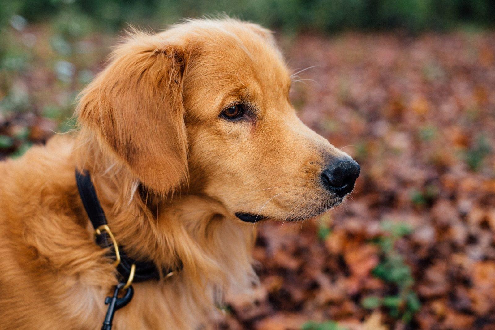 Mejores collares para perros