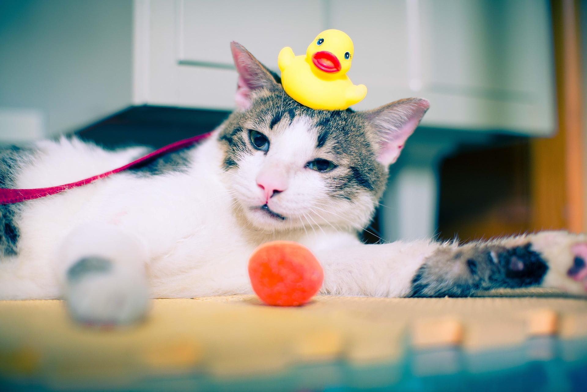 10 grandes formas de mantener entretenido a tu gato