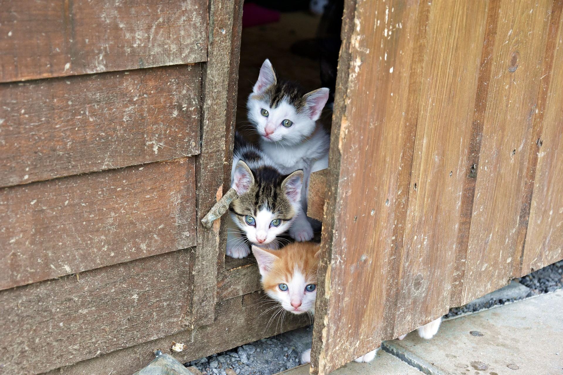 Mejor manera de presentarle a tu gato un gato nuevo 1