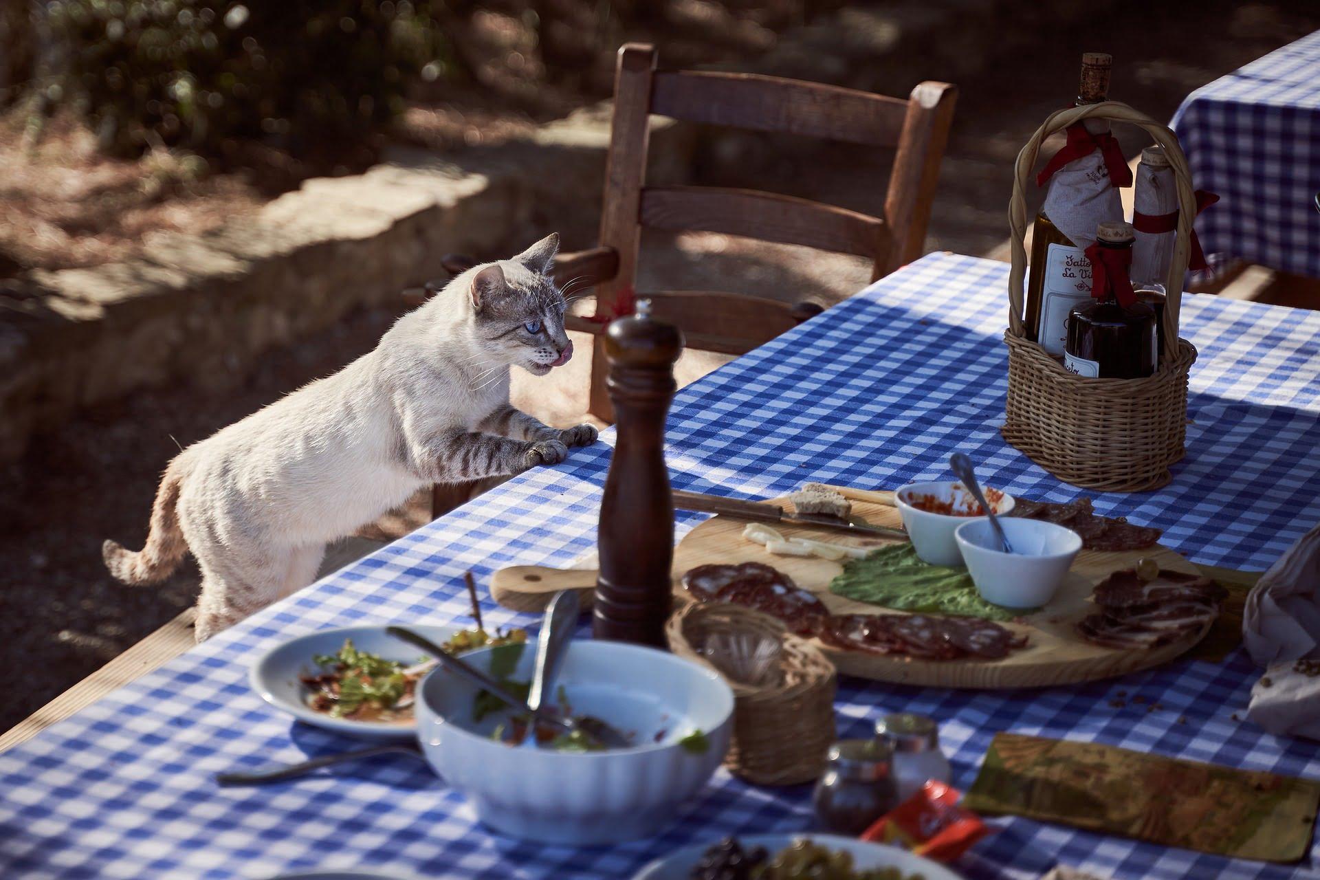 Inteligencia de los gatos: Los hechos te sorprenderán