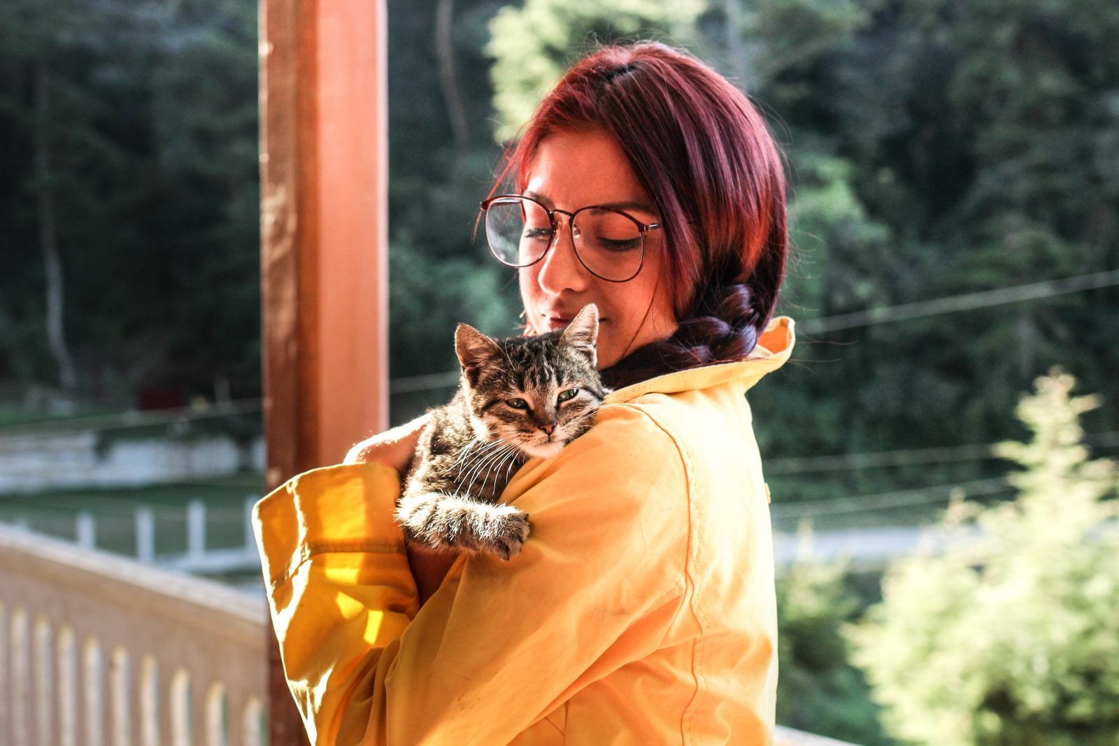 ¿Qué piensan los gatos de los humanos?