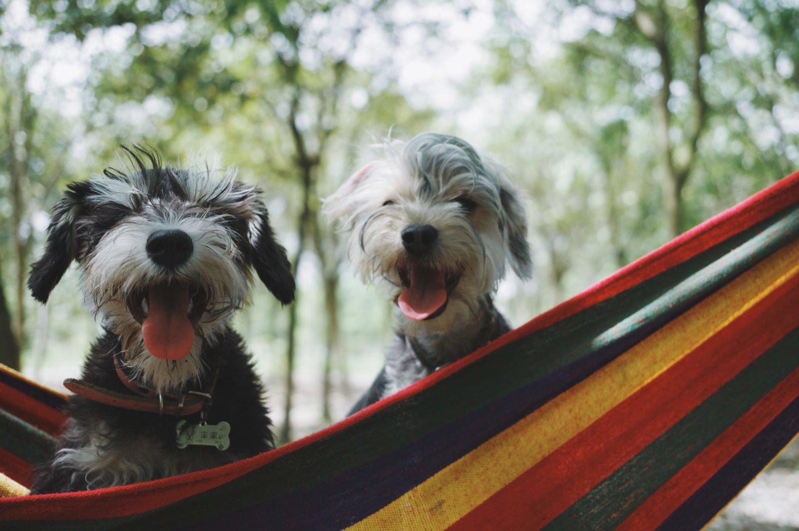 Mejores razas de perros para compañía