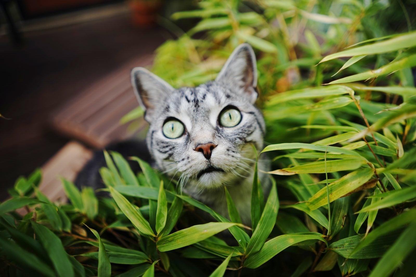 Los 10 mejores consejos para encontrar gatos perdidos