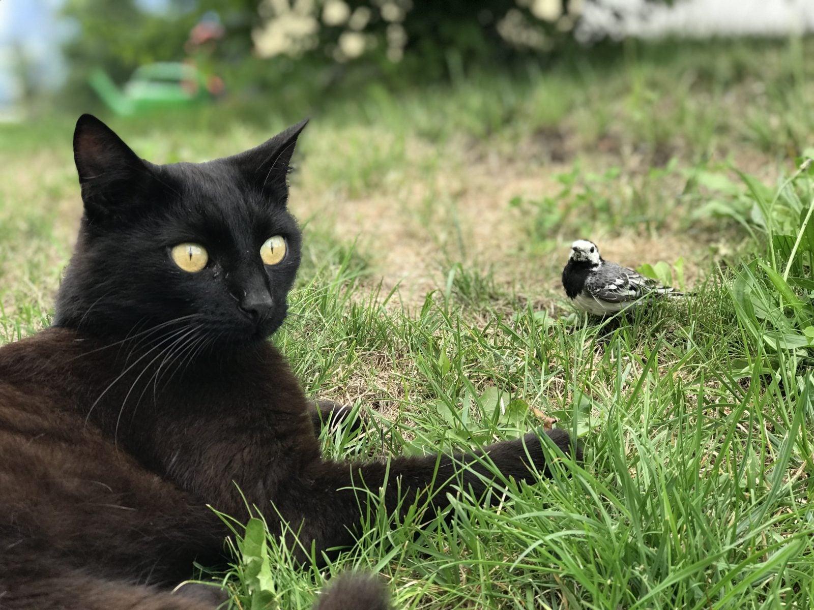 ¿Por qué los gatos traen animales muertos a casa?