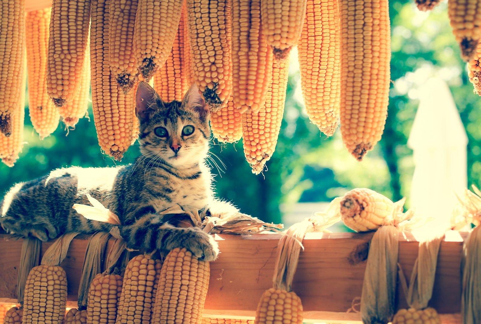 ¿Por qué los gatos llevan su comida lejos de sus cuencos?