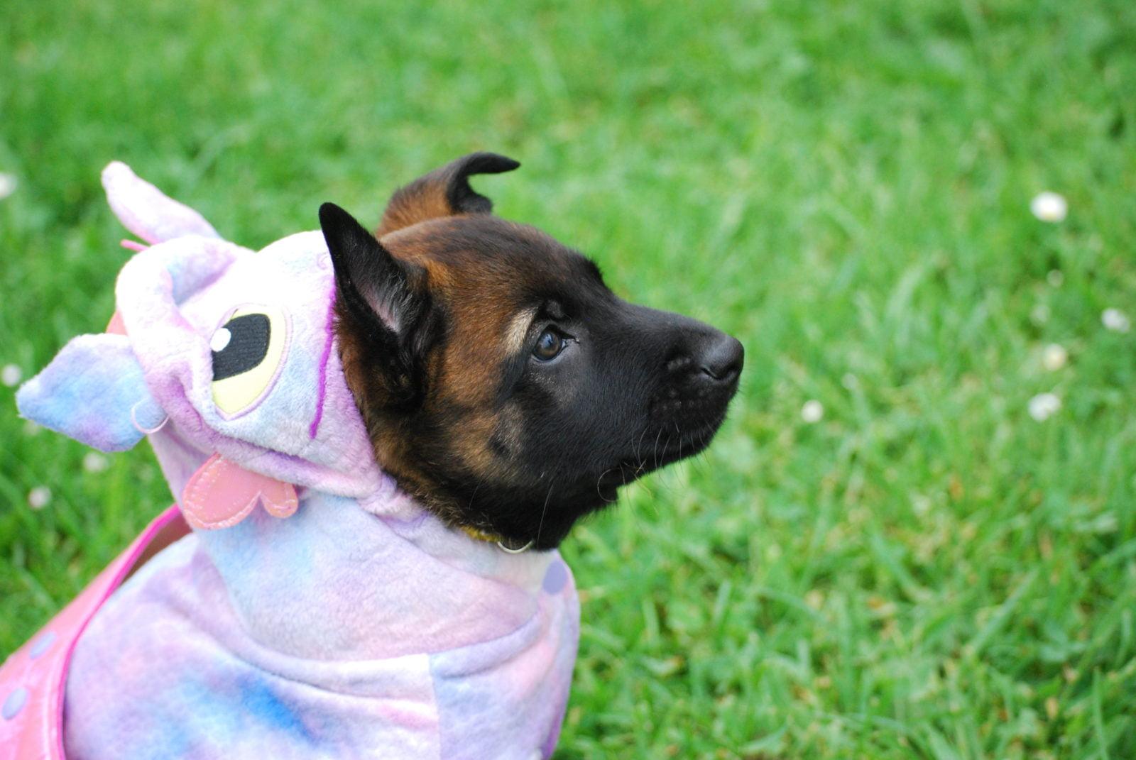 Los mejores disfraces de dragón para perros de 2020 (Guía) 1
