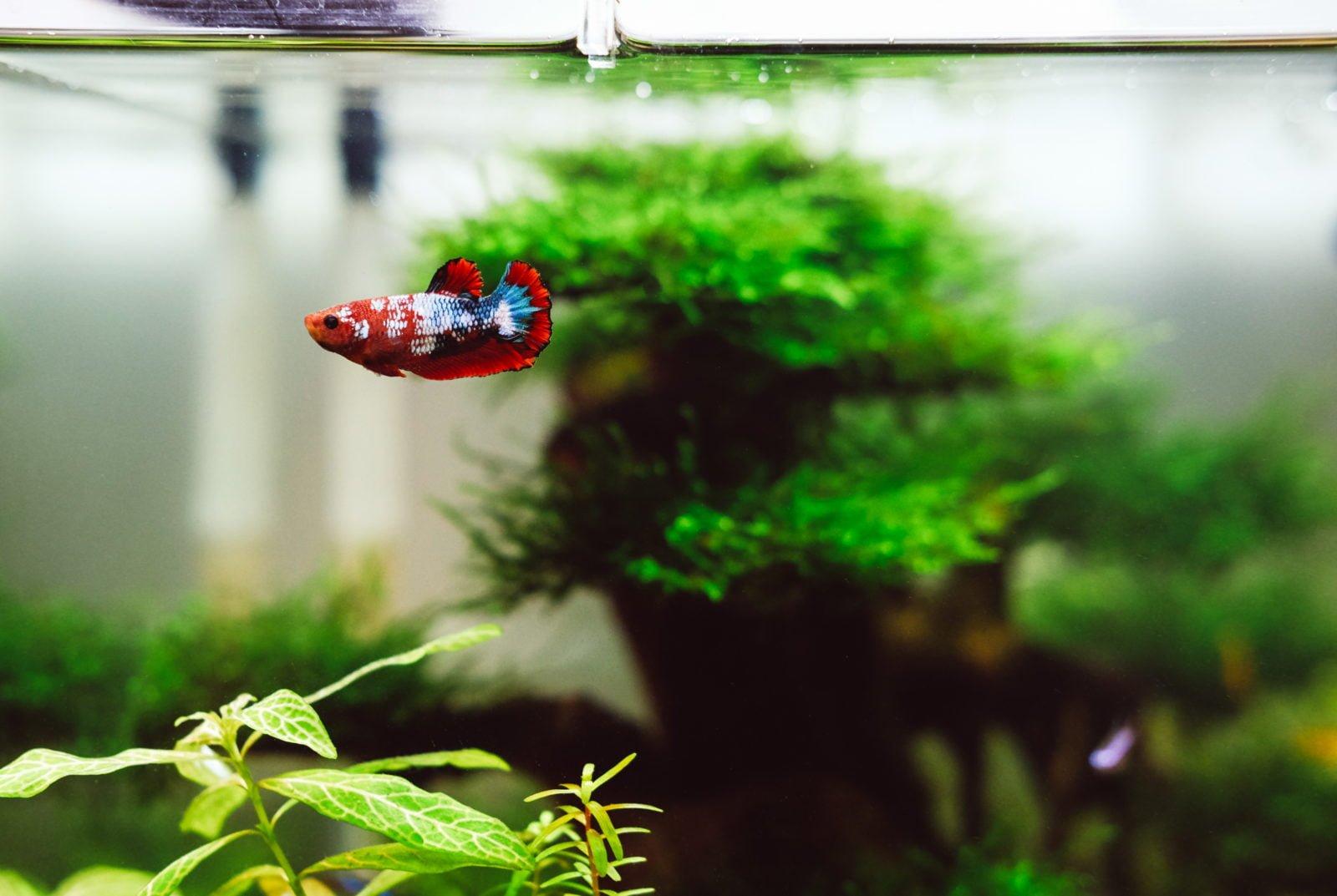 Mejores Skimmers apra acuario