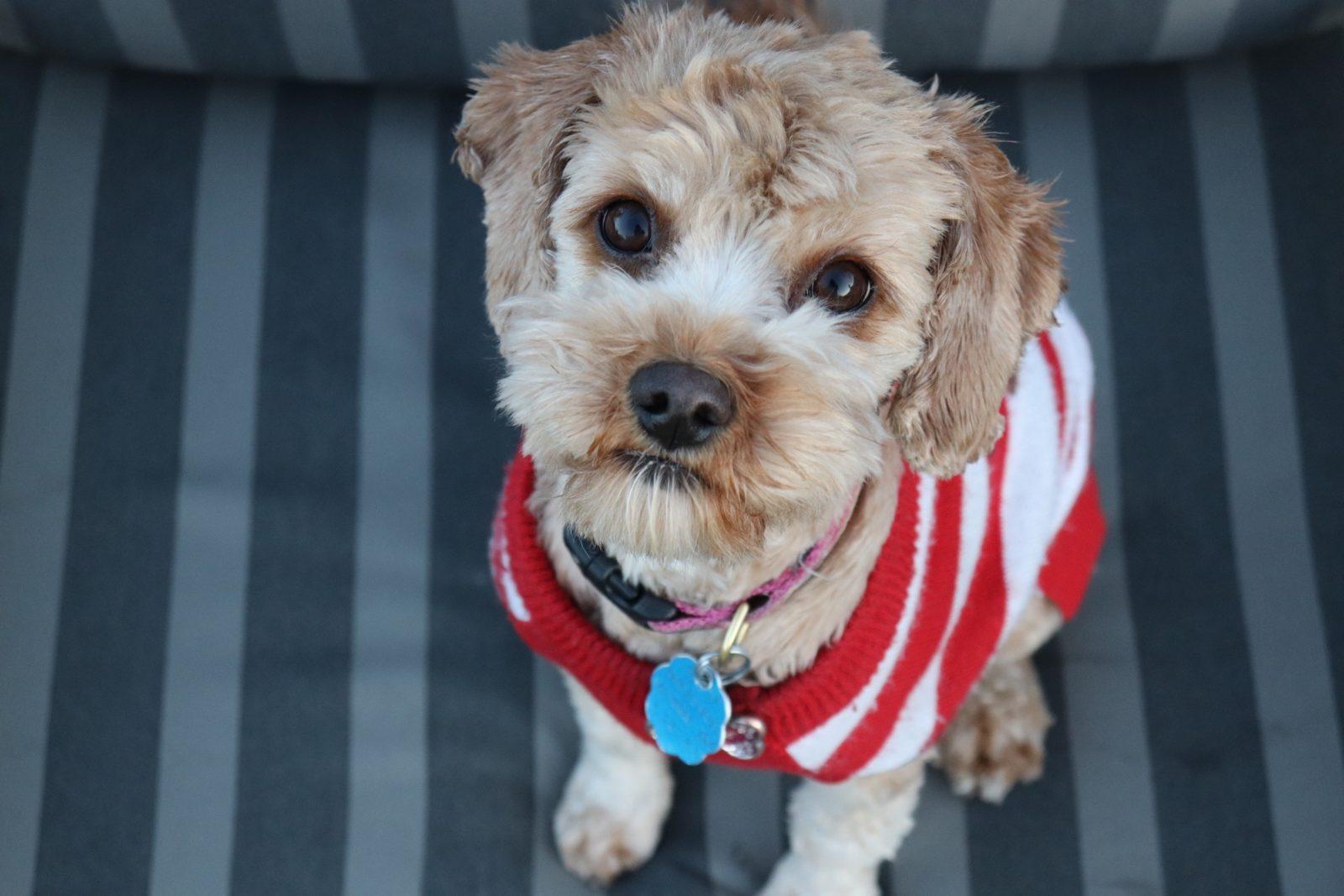 Guía de compra de jerséis para perros