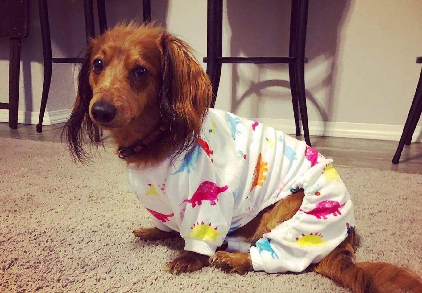 Guía comprar pijamas para perros