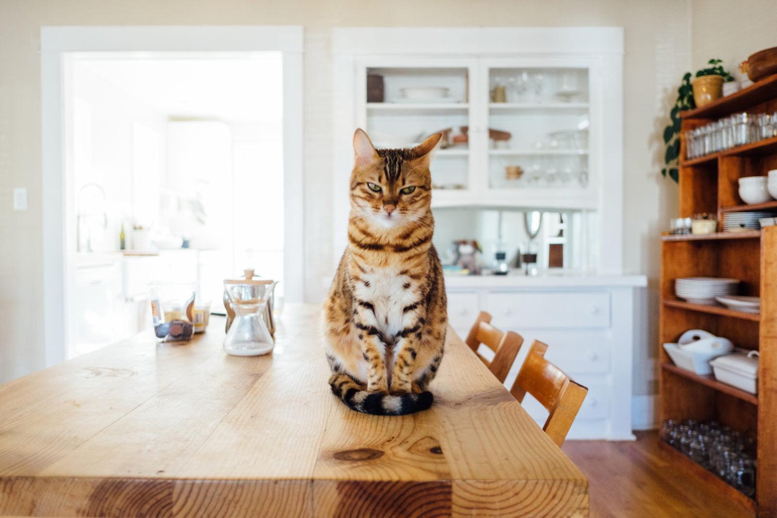 Consejos para mantener feliz a un gato de interior