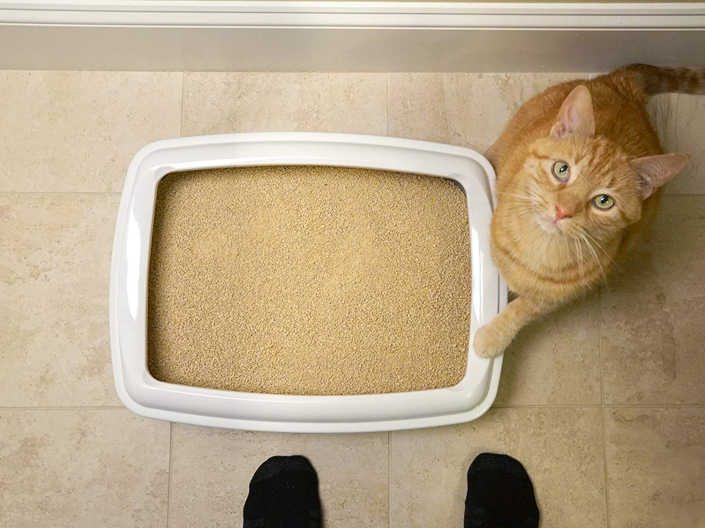 comprar arena sin polvo para gatos alergia