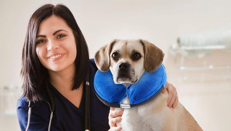 Comprar collares isabelinos para perros