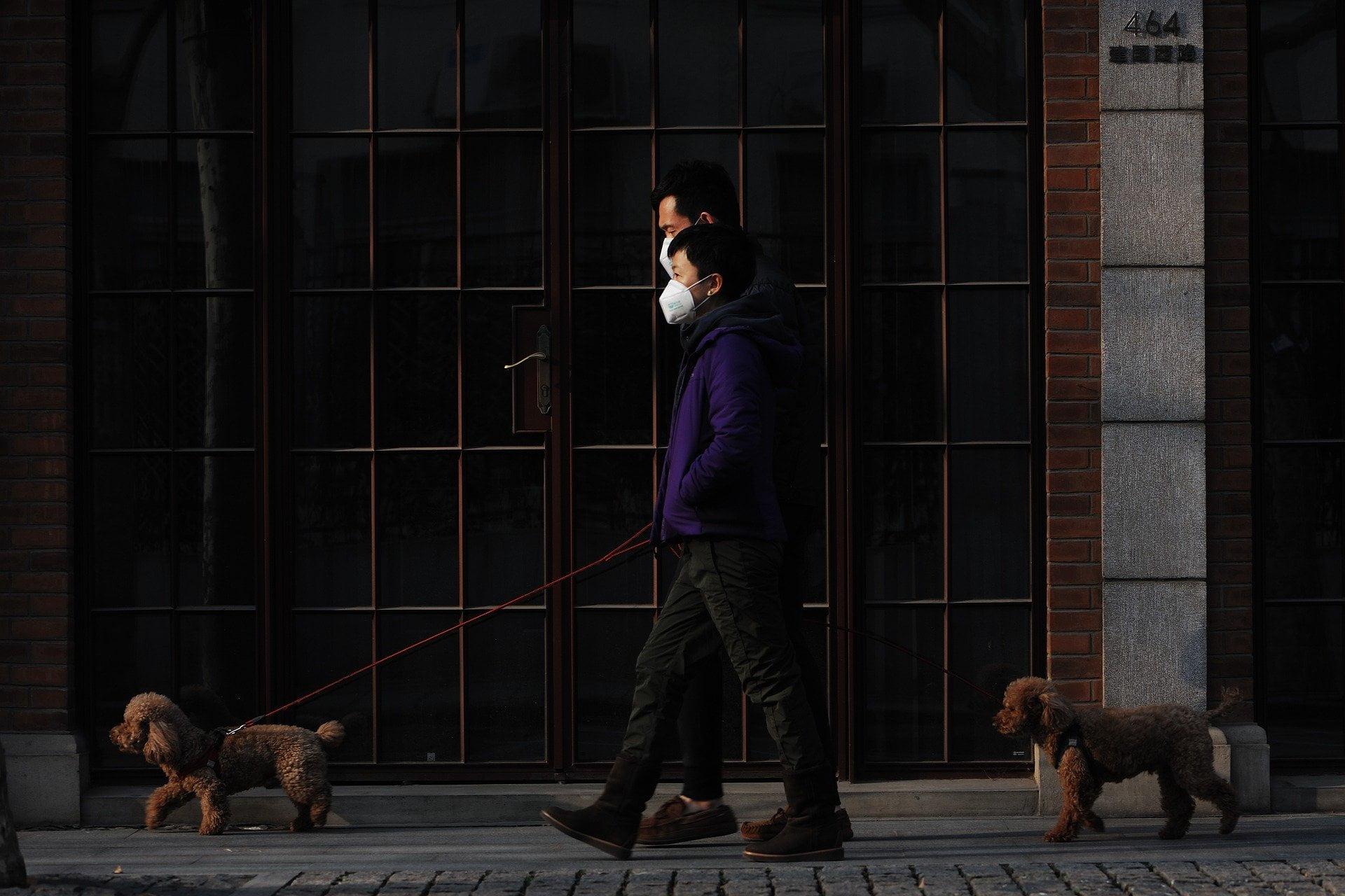 Enfermedad del Coronavirus Canino - ¿Pueden los perros contraer COVID-19? 1