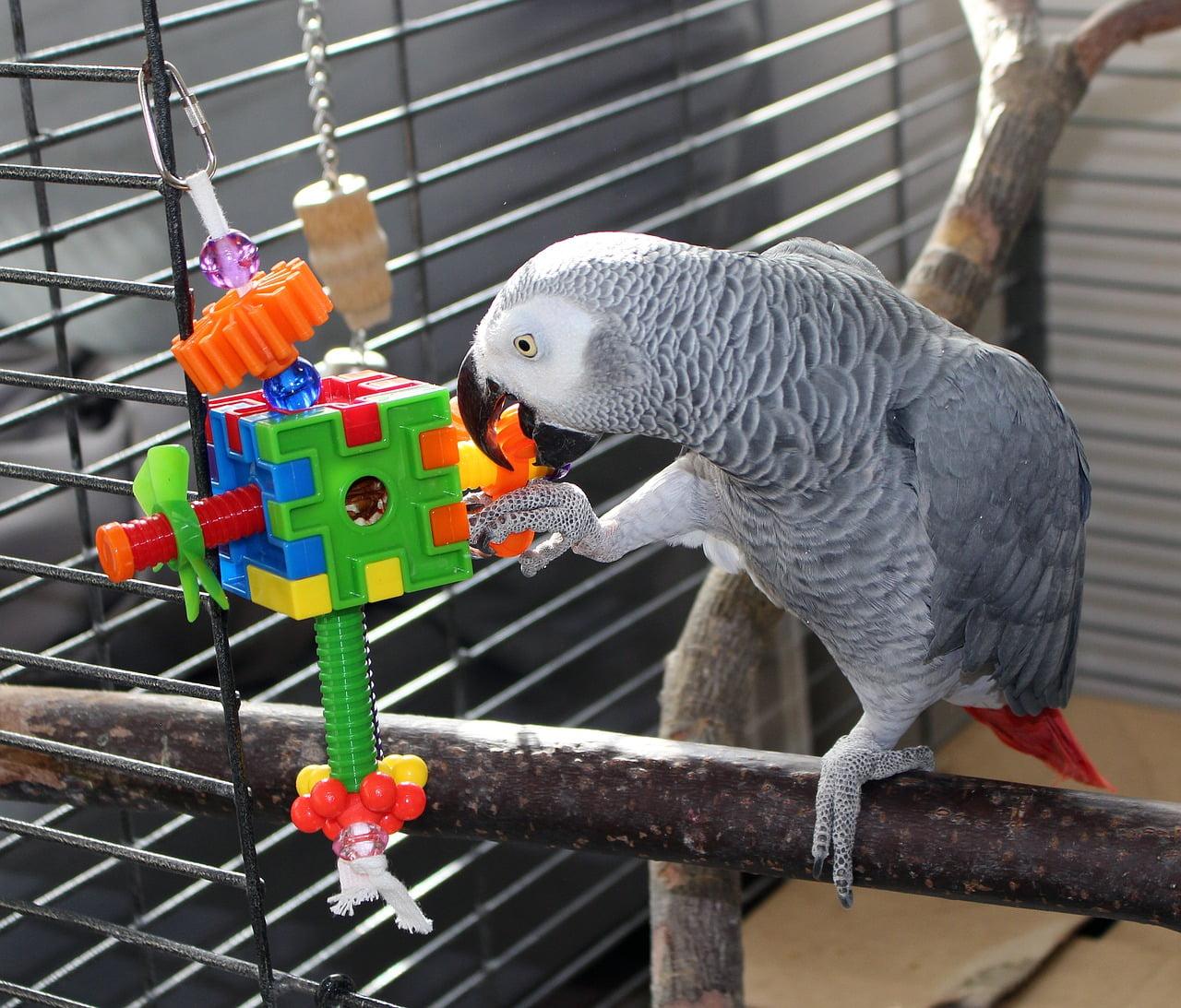 juguetes para pájaros