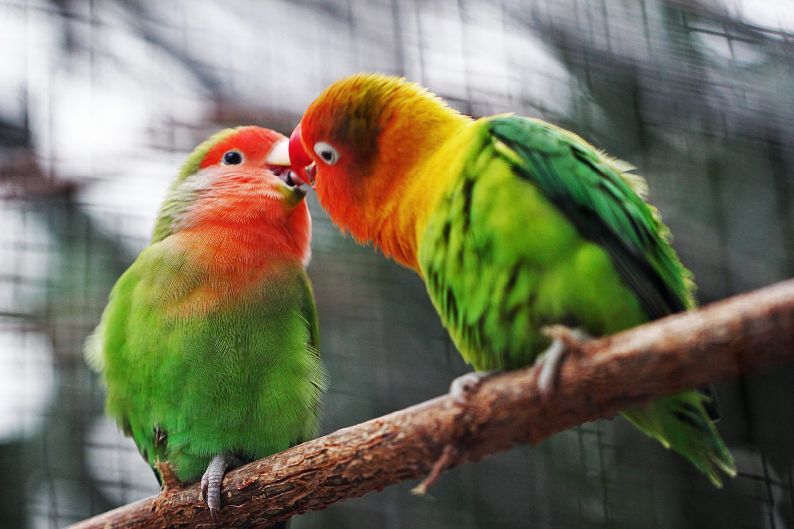 Señales de que NO debes tener un pájaro de mascota