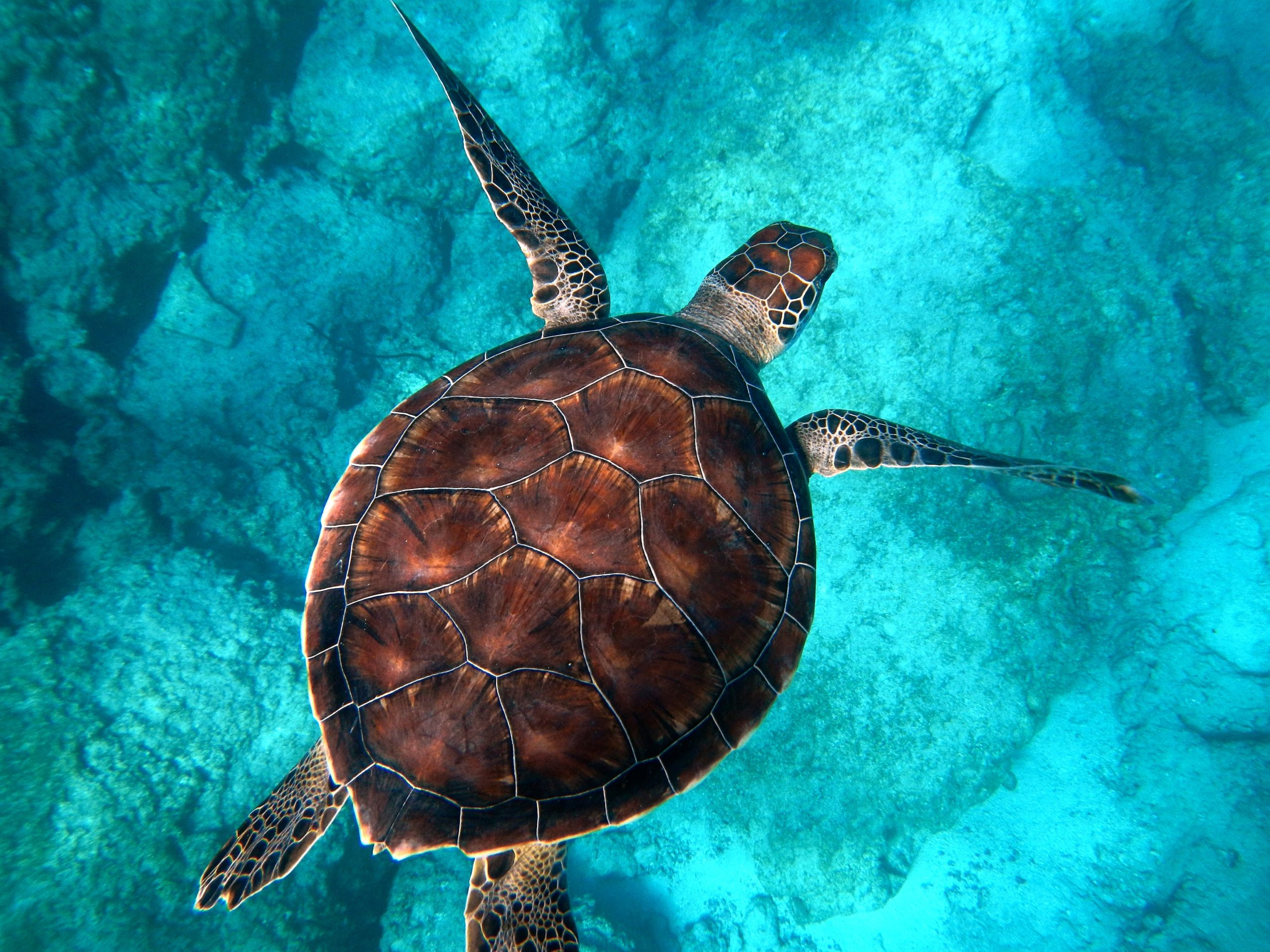 ¿Por qué las tortugas viven tanto tiempo? 1