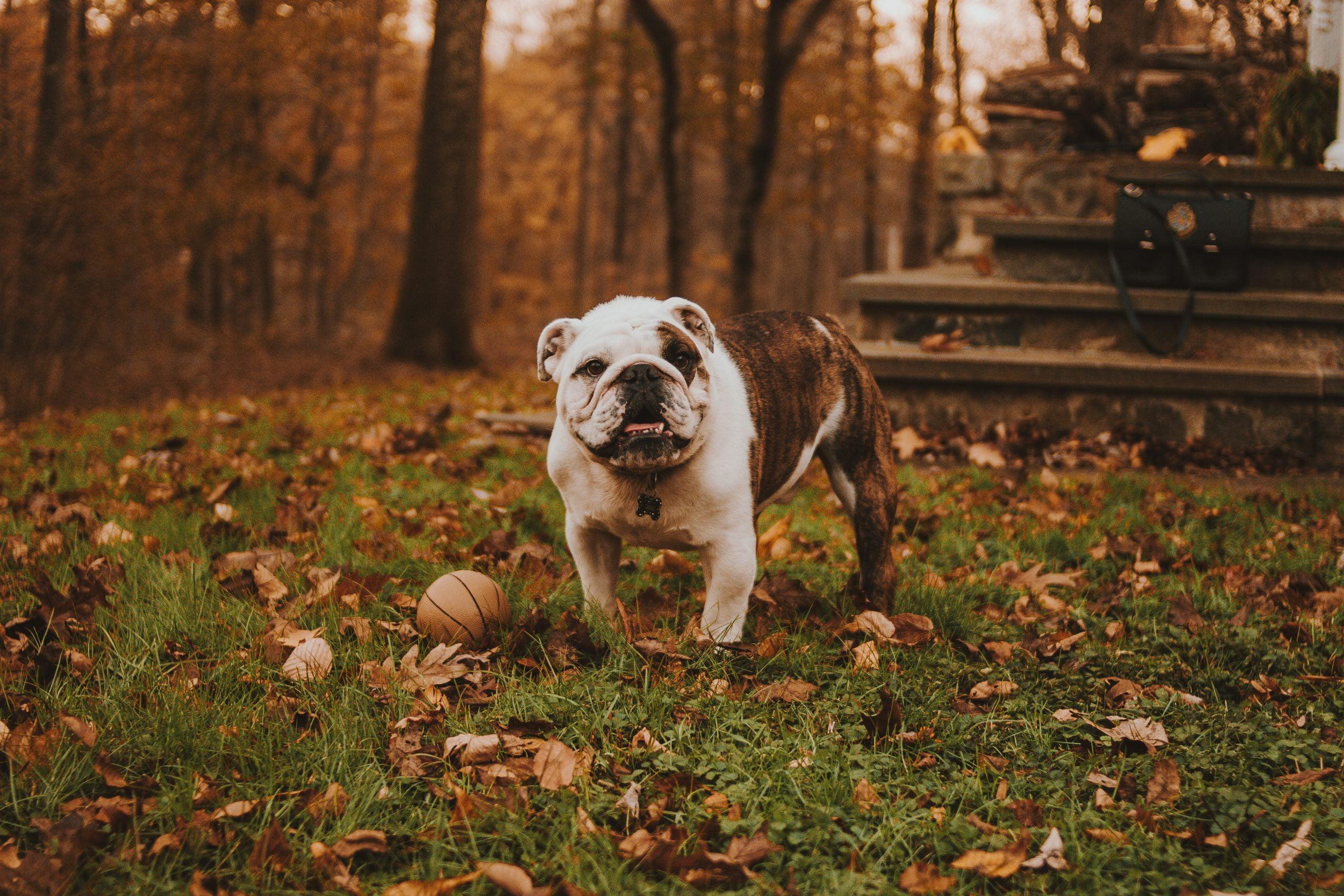 Lista de cosas que hacer con perros mayores